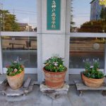 【ボランティア部】正門付近の花を植え替えました!
